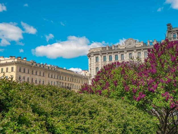 Paesaggio della città di estate con alberi in fiore