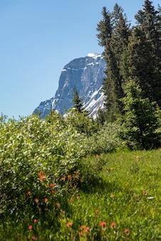 Paesaggio della foresta del canada con la grande montagna nei precedenti, alberta