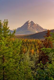 Paesaggio della foresta del canada con la grande montagna nei precedenti