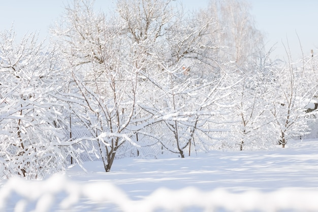 Paesaggio della foresta di inverno con neve sui rami di albero