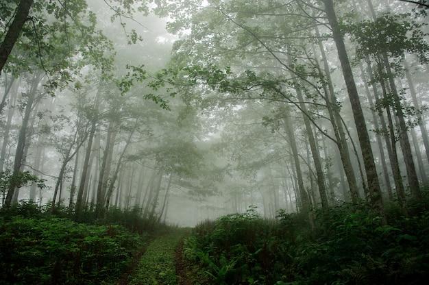 Paesaggio della foresta profonda coperta di nebbia