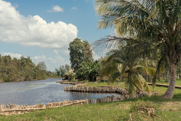 Paesaggio della foresta tropicale con palme sulla riva del fiume