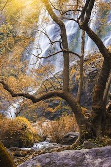 Paesaggio della foto del paesaggio della tailandia del parco nazionale della cascata di klonglan
