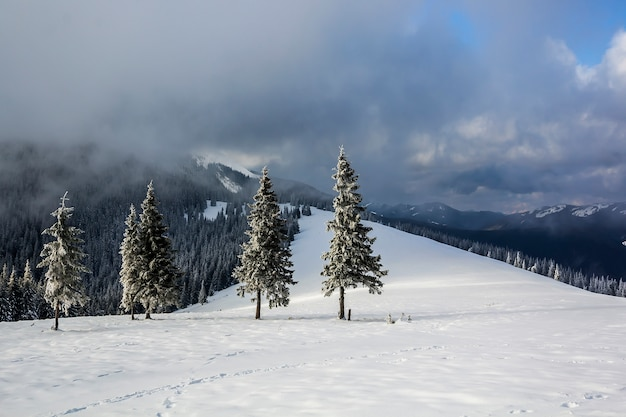 Paesaggio della montagna di inverno con i pini innevati