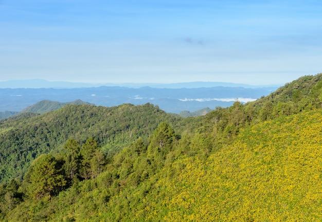 Paesaggio della natura della montagna con il girasole messicano che fiorisce in meahongson, tailandia.