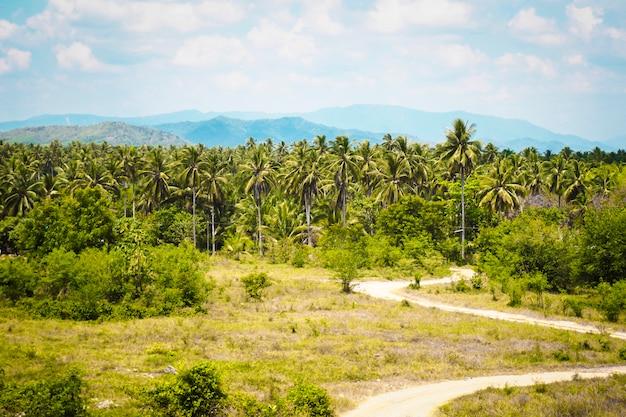 Paesaggio della palma dell'asia. idea di viaggio