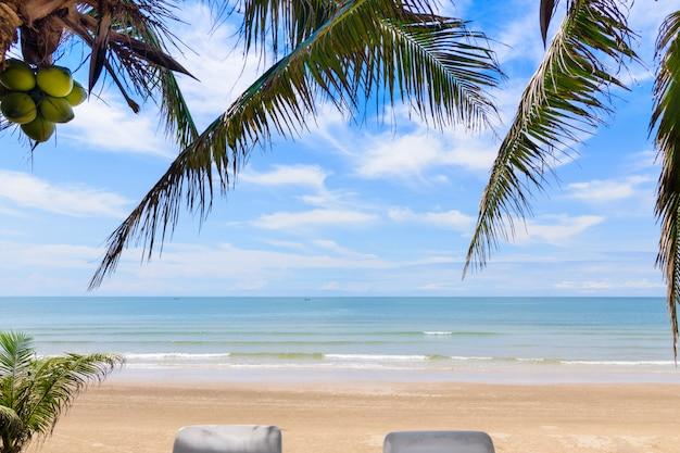Paesaggio della spiaggia con albero di cocco
