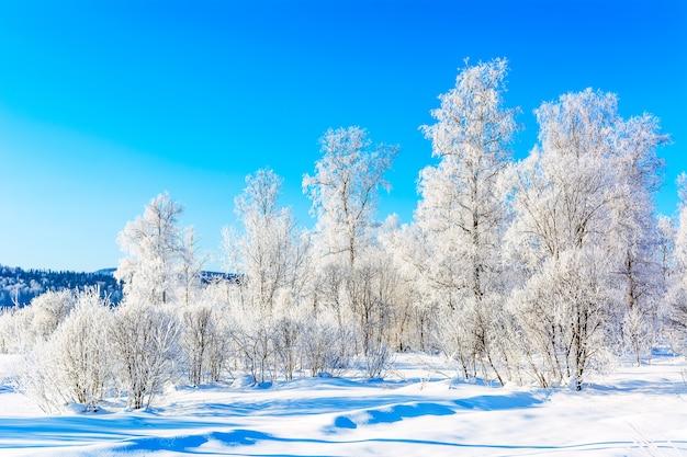 Paesaggio delle colline invernali con alberi innevati bianchi