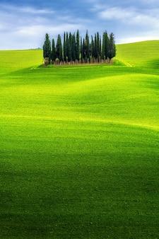 Paesaggio delle colline verdi della toscana, italia