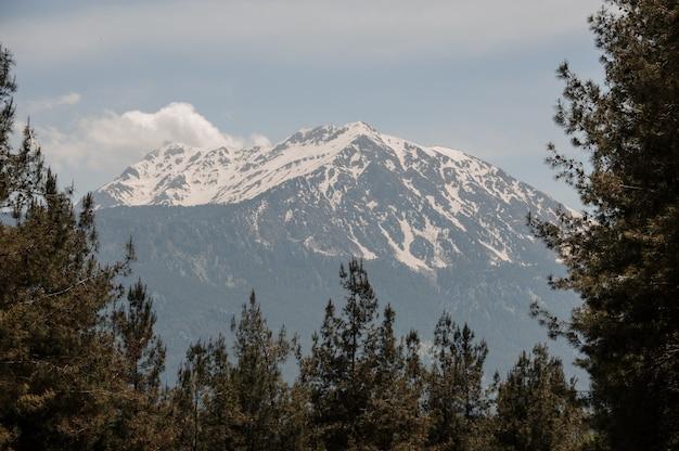 Paesaggio delle montagne coperte di neve