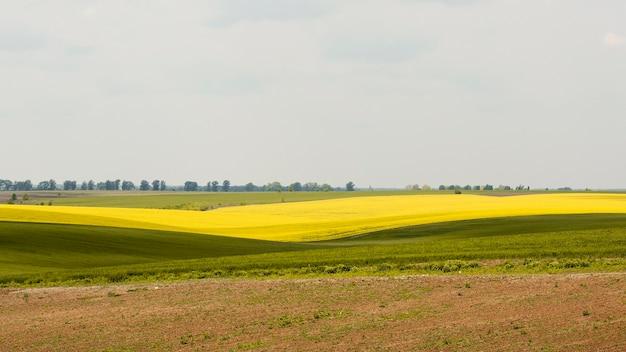Paesaggio di campo agricolo