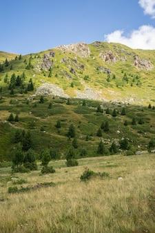 Paesaggio di colline coperte di erba e alberi sotto un cielo nuvoloso e luce solare durante il giorno