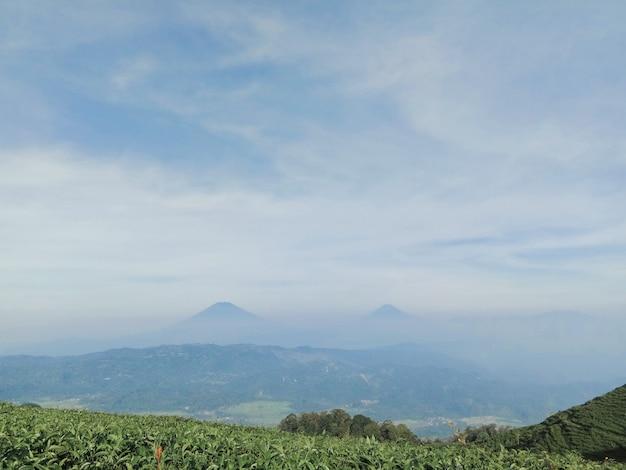 Paesaggio di due montagne dai giardini del tè