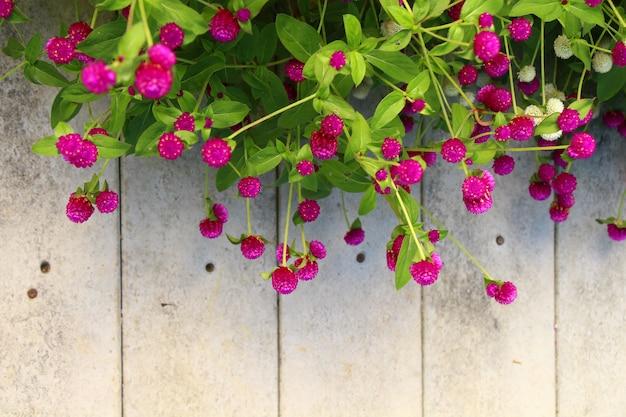 Paesaggio di fiori colorati giardino naturale vista