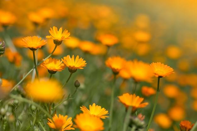 Paesaggio di fiori colorati