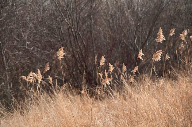 Paesaggio di gimli manitoba in canada