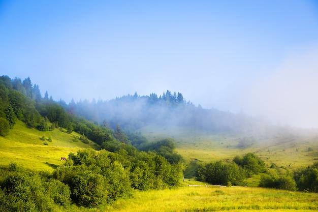 Paesaggio di mattina con nebbia montagne carpatiche in ucraina.
