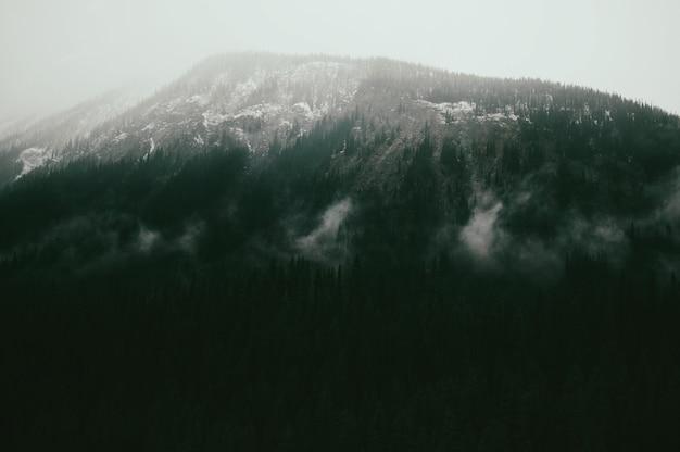 Paesaggio di montagne coperte di foreste sotto la luce del sole