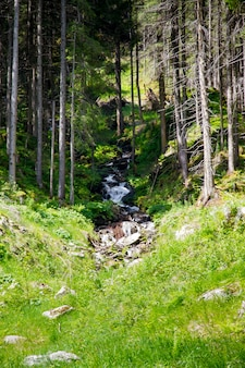 Paesaggio di montagne e foreste e un piccolo fiume
