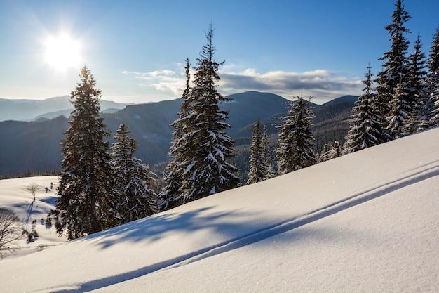 Paesaggio di natale di inverno della valle della montagna il giorno soleggiato gelido. coperto di abeti alti gelo nella neve profonda, cresta di montagna scura legnosa, bagliore morbido all'orizzonte, cielo blu