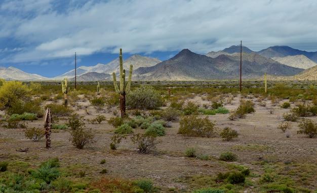 Paesaggio di panorama del deserto dell'arizona in cactus del saguaro