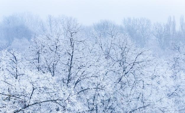 Paesaggio di rami di alberi coperti di brina durante l'inverno a zagabria in croazia