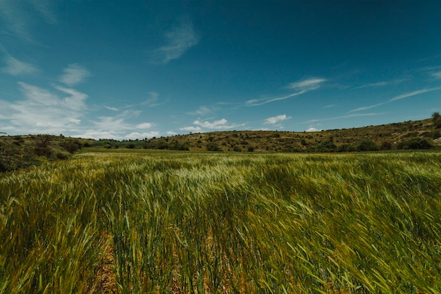 Paesaggio di un campo verde