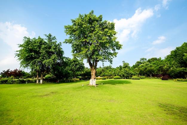 Paesaggio erboso e verde ambiente sfondo parco