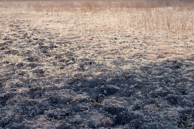 Paesaggio estivo con erba secca
