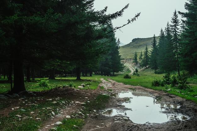 Paesaggio forestale atmosferico scuro con pozzanghera su strada sterrata.