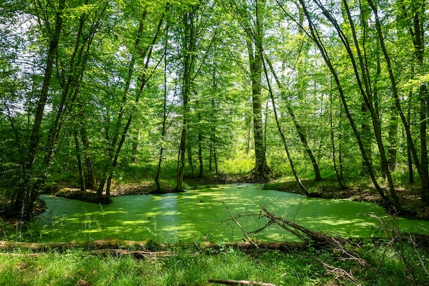Paesaggio forestale di fontainebleau, francia