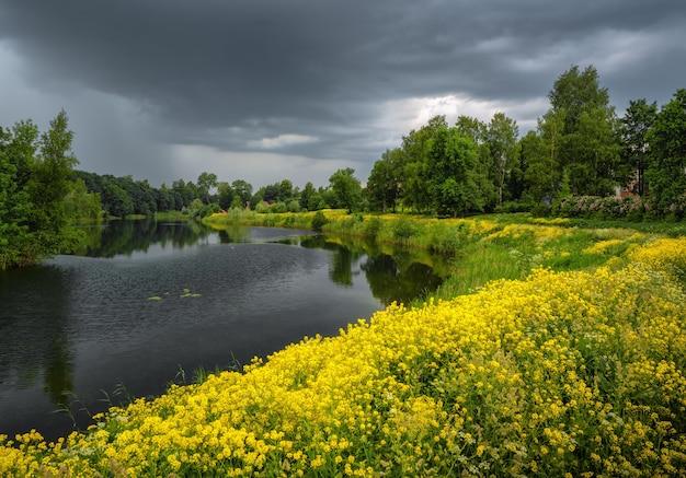Paesaggio fragoroso di estate con un fiume e fiori gialli