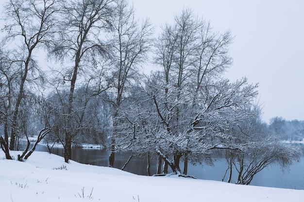 Paesaggio idilliaco sereno di inverno con la foresta gelida nevosa