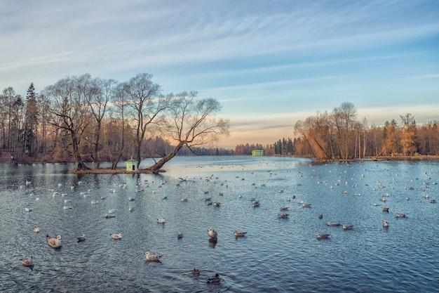 Paesaggio invernale al tramonto con lago e gabbiani