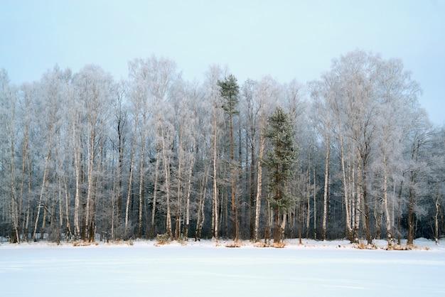 Paesaggio invernale, alberi nella foresta ricoperta di brina.
