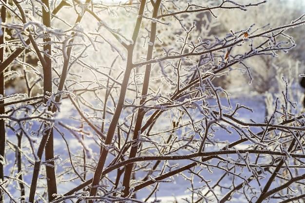Paesaggio invernale con alberi con gelo