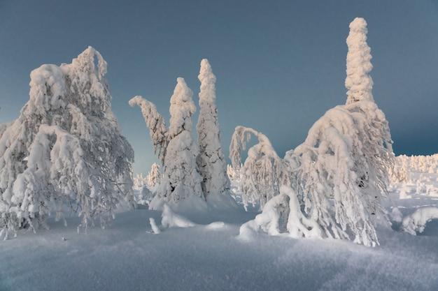 Paesaggio invernale con alberi coperti di neve nella foresta di inverno.
