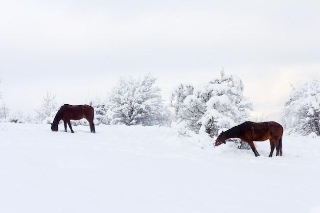 Paesaggio invernale con cavalli marroni sul pascolo invernale