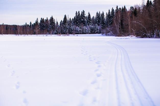 Paesaggio invernale con foresta sul retro