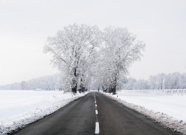 Paesaggio invernale con la foresta di strada