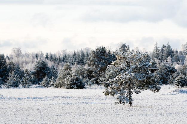 Paesaggio invernale di alberi glassati contro un cielo blu in una mattina soleggiata