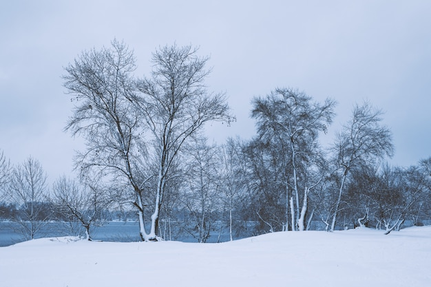 Paesaggio invernale - foresta alberi innevati in inverno nuvoloso tempo