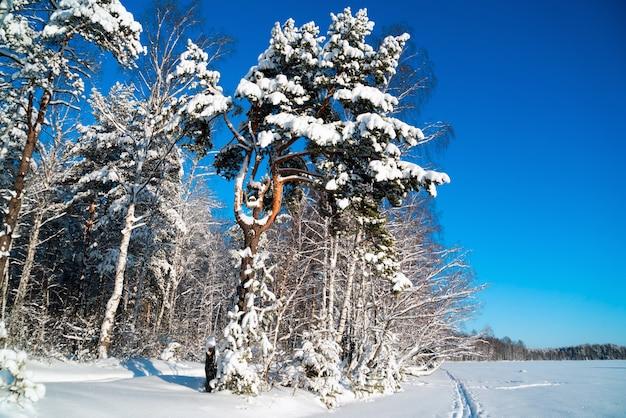 Paesaggio invernale in una foresta innevata