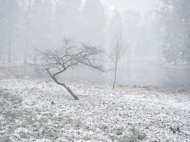 Paesaggio invernale minimalista con due alberi nel parco.