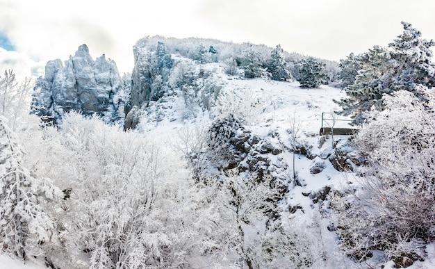 Paesaggio invernale sulla cima di una montagna con alberi innevati