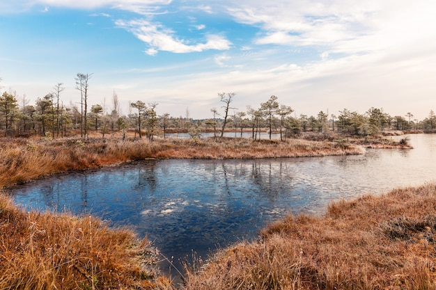 Paesaggio. mattina gelida nella palude sollevata. parco nazionale di kemeri, lettonia