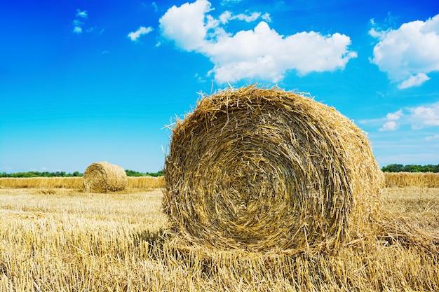 Paesaggio naturale. campo con la balla di fieno sotto il cielo blu