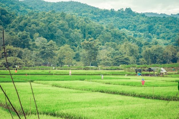 Paesaggio naturale con erbe verdi