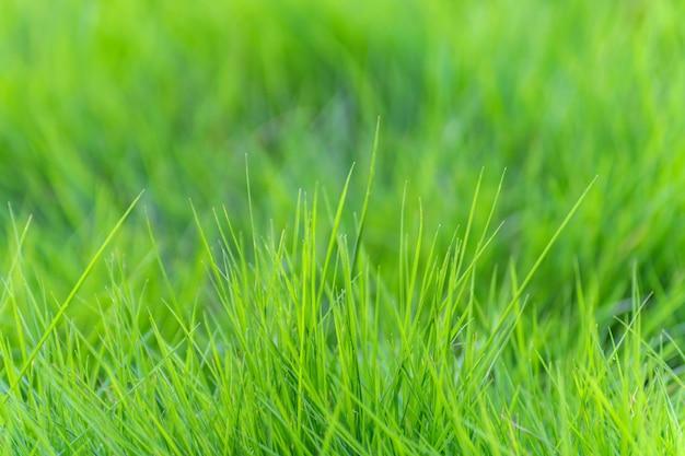 Paesaggio naturale vegetazione leggera verde