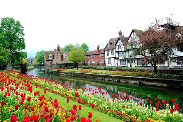 Paesaggio nebbioso di canterbury con i tulipani di fioritura e le case tradizionali, inghilterra, regno unito